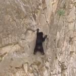 フリーソロをきめるクライミング熊がハンパないと話題
