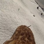 Flying-eagle-point-of-view-more-footage-YouTube.jpg