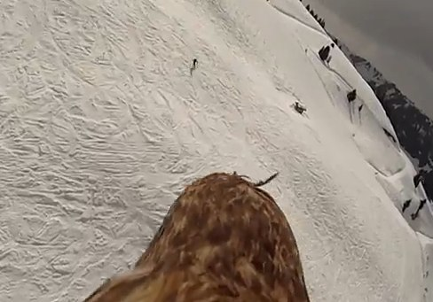 Flying eagle point of view  more footage  YouTube