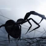 不気味だけどスゴイ! – クモのハンティングCG