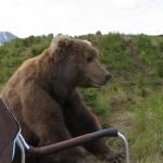 Massive_Brown_Bear