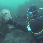 Seal_of_Approval_on_Vimeo.png