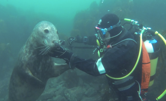 Seal of Approval on Vimeo