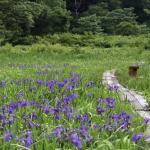 Shinetsu_Trail_Promotional_Video.png