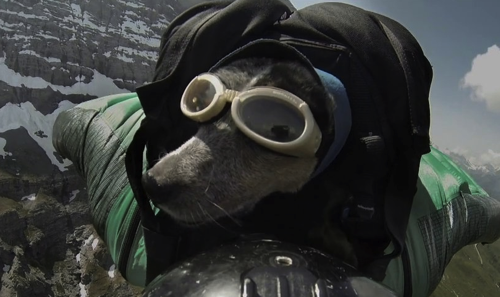 When Dogs Fly World s First Wingsuit BASE Jumping Dog on Vimeo